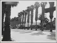 [900 block of 4th Street, Santa Monica]