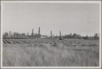 [Typical view of land utilisation, southeast of Torrance, Western Avenue toward east (Shoestring) wasteland; Japanese vegetables; eucalyptus;oil]