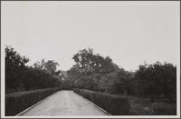 [Estate of R. H. Lacy, South Pasadena Avenue at Garfield Avenue; orange trees and oaks]