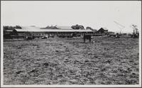 [Bixby Ranch, east of Long Beach]
