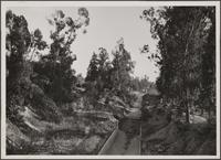 [Looking south from Alhambra Road, Alhambra; canyon eucalyptus and storm drain]