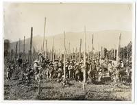 Agricultural laborers harvesting hops