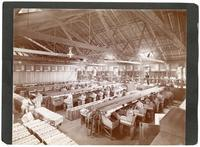 Packing oranges, Redlands, California