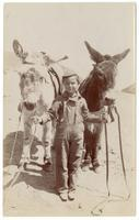 Child holding two burros by the reins