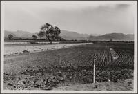 San Fernando Valley spreading grounds