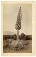 Adolph Petsch collection of photographs of Pasadena and Southern California