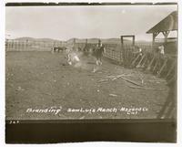 Branding, San Luis Ranch, Merced Co. California