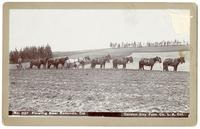 Plowing near Redondo, California