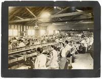 Women working in a fruit cannery, Sunnyvale, California