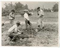 Agricultural workers planting orange trees