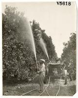 Agricultural workers treating a citrus orchard with pesticides