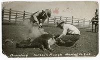 Branding, San Luis Ranch, Merced Co. California