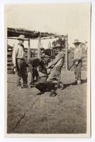 Ranchers branding cattle at the Santa Rita Rancho, California
