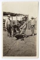 Ranchers branding cattle at the Santa Rita Rancho, California