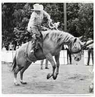 View of cowboy riding