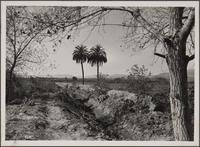 Mission San Fernando, date palms, adobe wall
