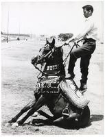 Man riding an Egyptian dancing horse