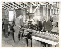Workers labeling cans of olives, California