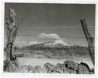 View of ranchlands through barbed wire fence