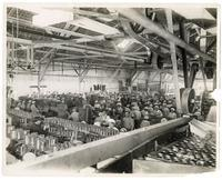 Workers canning peaches in San Jose, California