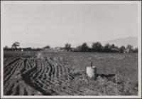 North of Alhambra Road; remnant of pipe from former irrigation (an orchard up until a few years ago), in the background a private water reservoir, now empty