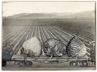 Black and white photo collage featuring strawberries on a railway transport car