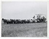 A combined harvester and thrasher pulled by 32 horses at work on the ranch of H.M.K. in the Imperial Valley, California, 1904