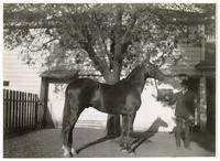 Man and horse in front of a building, circa 1909