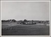 Ranch, looking north from Cedar Street and Redondo Boulevard, Inglewood