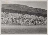 Los Palos Verdes, southeast of bench mark 157, about 175 ft. elevation