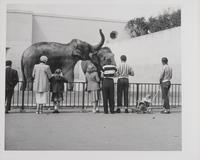 Elephants, San Francisco Zoo, San Francisco