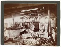 Workers packing lemons at the Limoneira Company in Santa Paula, California