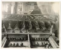 Machinery for brushing washed fruit in a food processing facility