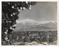 Orange Industry, Los Angeles County