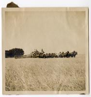 Agricultural laborers using a combine in the hay fields at Glenn Ranch