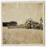Mrs. Crawford holding the reins of the combine, Glenn County
