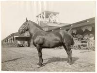 No. 1 Black Prince of McNab & Smith, 208 Davis Street, San Francisco, circa 1908