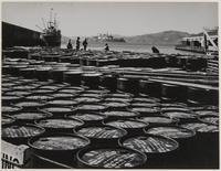 Fishermen at waterfront in vicinity of Pier 37, Alcatraz in background, San Francisco