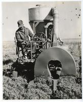 Agricultural worker using machine for gthering seed from guayule plants