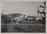 Looking north from southwest of McCarthy Drive and Verdugo Road, walnut trees, reservoir in background