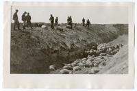 Men putting down diseased sheep, circa 1924