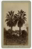 Palms, San Gabriel
