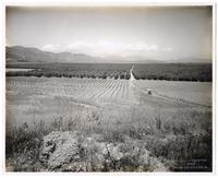 End section of the Sylmar Grove, California