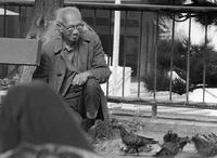 Man feeding pigeons in Portsmouth Square