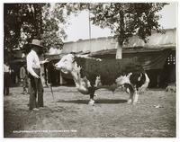 California State Fair, Sacramento, 1903