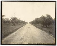 Road from Acampo, California to Olive Grove