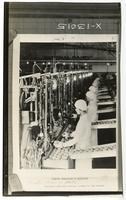 Women operating orange peeling machines
