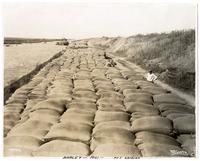 Sacks of barley laid out in Clarksburg, California, circa 1921