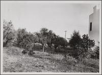 Abandoned orange orchard at southeast corner of Doran Street and Grove Place, Glendale