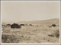 Looking west from Walnut Avenue and Kenneth Road, Burbank; alluvial cones with vineyard